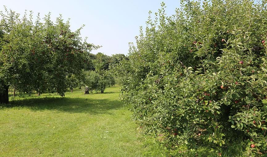 Experimental Orchard