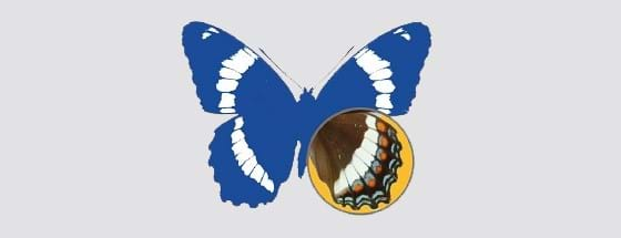Québec's entomology association logo